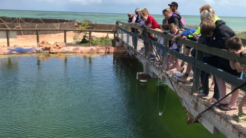 Ocean Park Aquarium, Shark Bay