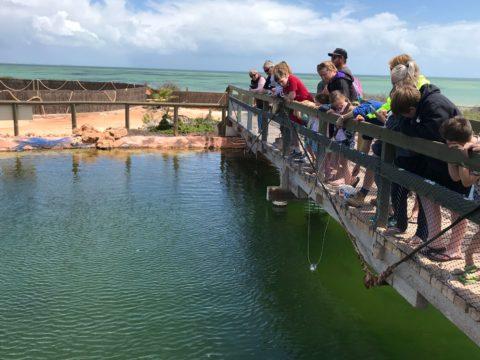 Ocean Park Aquarium, Shark Bay