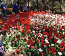 Araluen Botanic Park, Roleystone