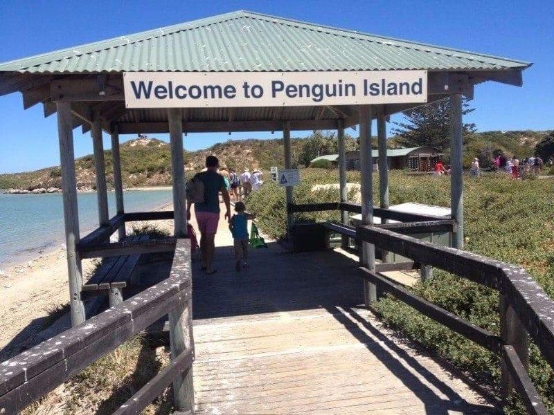 Penguinisland2