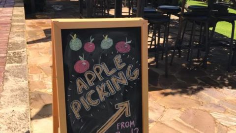 Apple Picking at Core Cider House, Pickering Brook