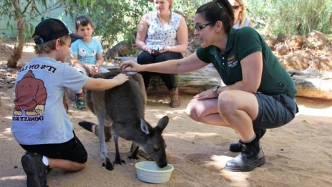 14 Things You Didn't Know You Could Do at Perth Zoo
