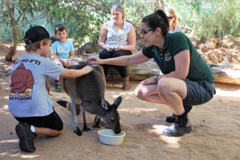 Close Encounters at Perth Zoo