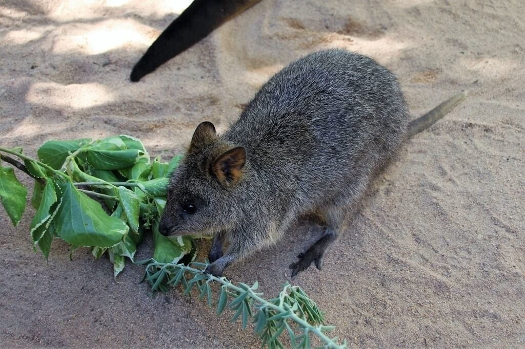 Close Encounters Perth Zoo