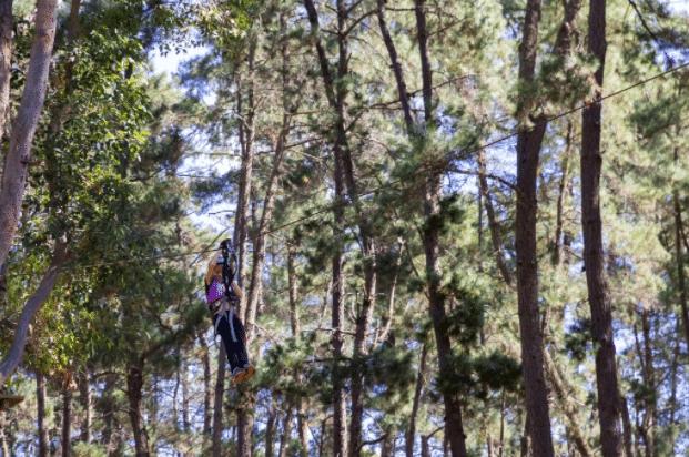 trees adventure