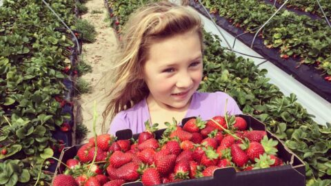 Kien Strawberry Farm