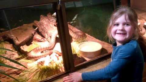 Armadale Reptile and Wildlife Centre