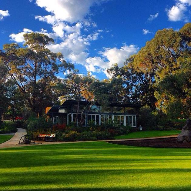 Zamia Cafe Kings Park Buggybuddys Guide For Families In