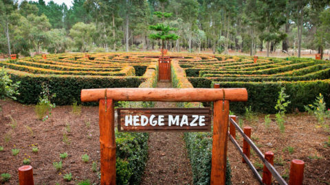 The Hedge Maze at The Maze, Home of Outback Splash, Bullsbrook