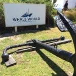 Whale World Albany