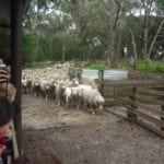 Yallingup Shearing Shed - Things to do with Kids in Margaret River