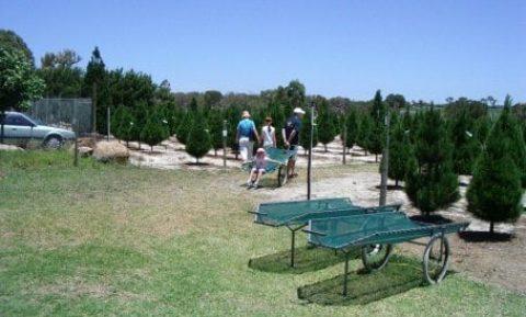 Real Christmas Trees Perth