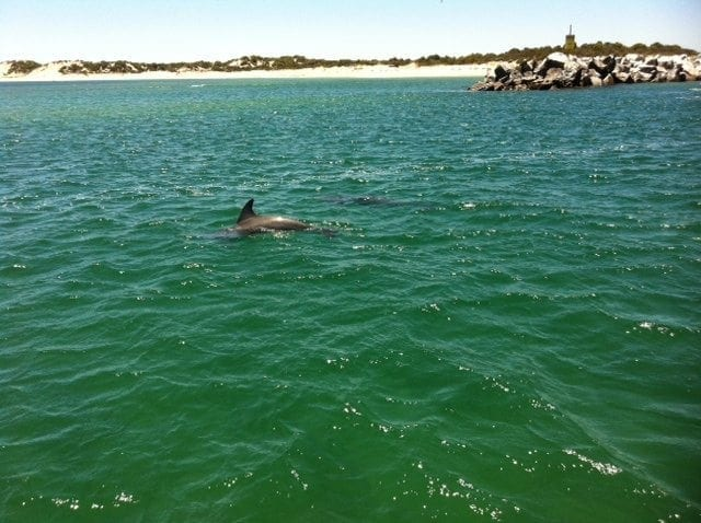 Dolphin Discovery Centre, Bunbury - Buggybuddys guide to Perth
