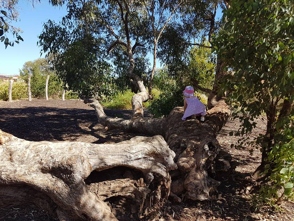 Wattle Grove Nature Playspace