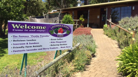 Lavender and Berry Farm, Pemberton