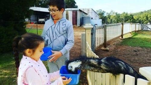 Kirup Kabins Farm Stay