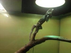 WA Reptile Park