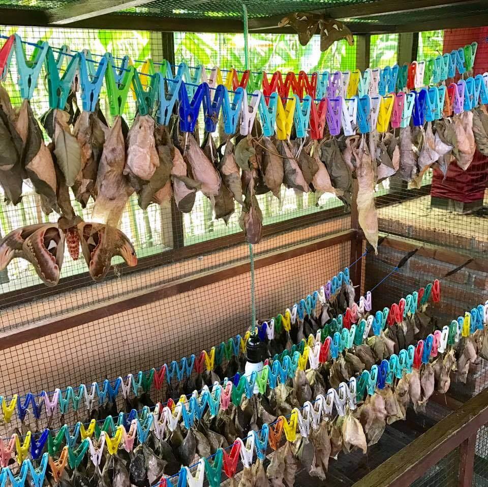 Kemenuh Butterfly Park, Bali