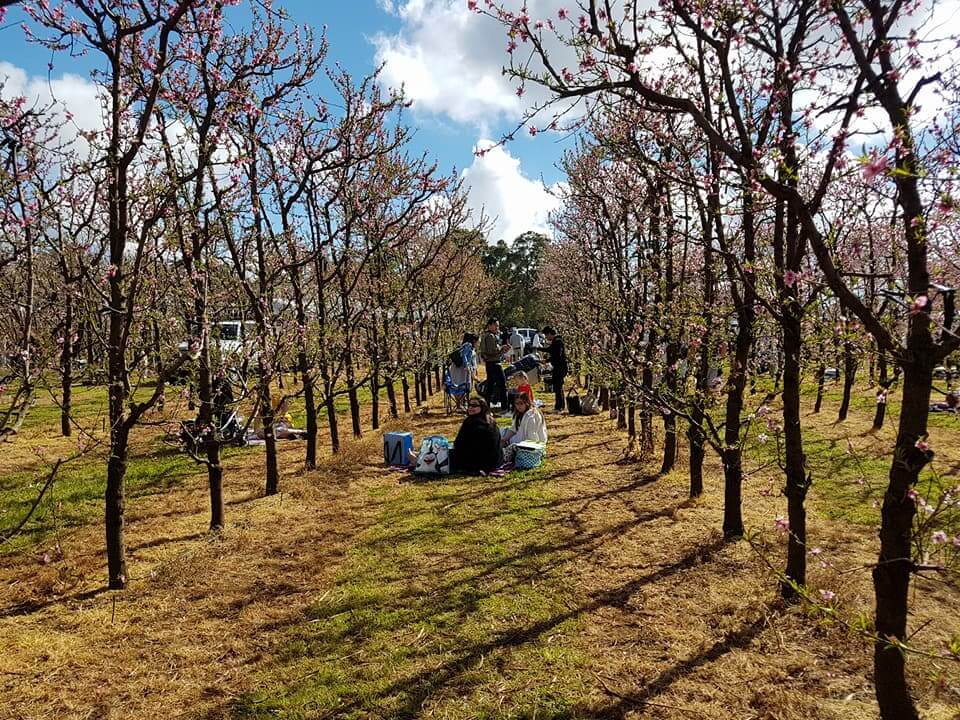 S&R Orchard