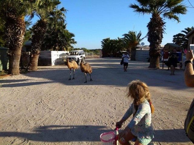 RAC Monkey Mia Resort