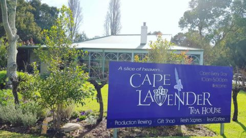 Cape Lavender Teahouse, Yallingup