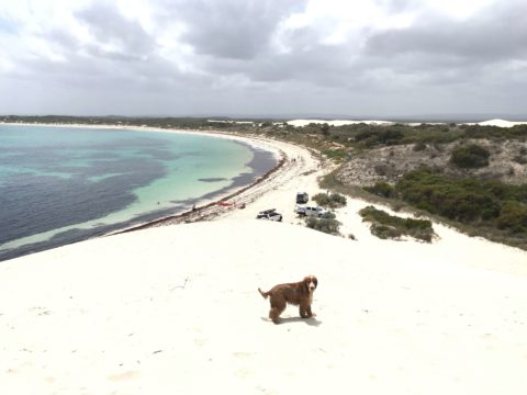 Sand Dunes Sandy Cape Reserve Dundaragan