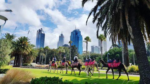 Camel West Inner City Camel Riding Tour