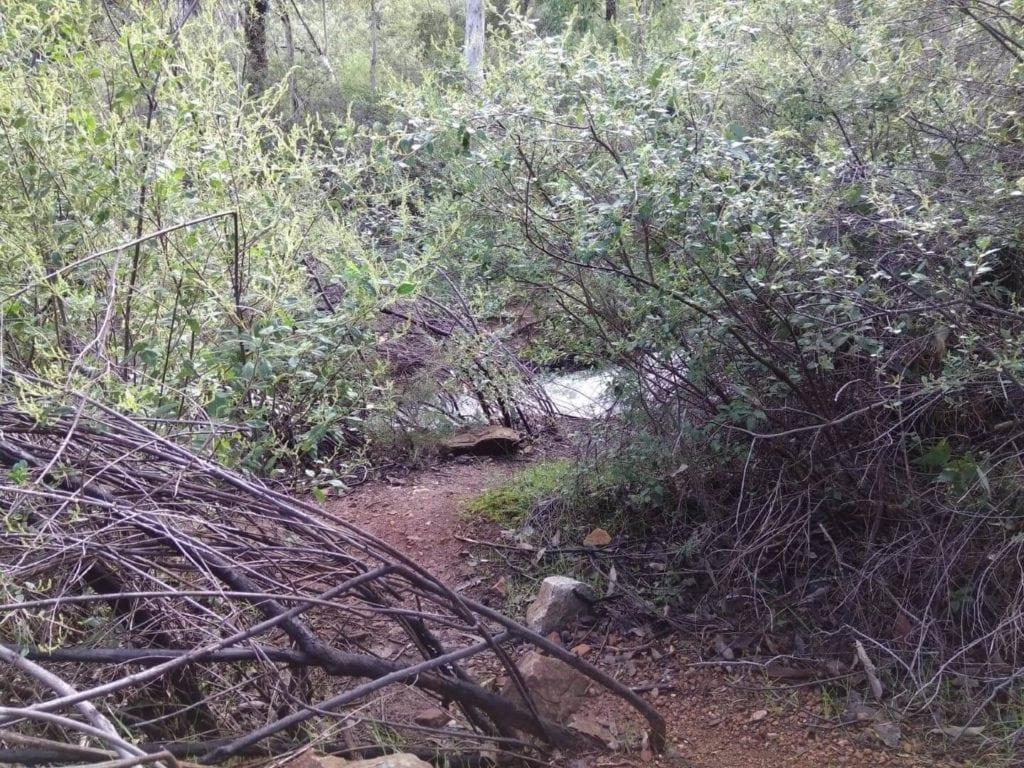 Lesmurdie Falls, Base Track