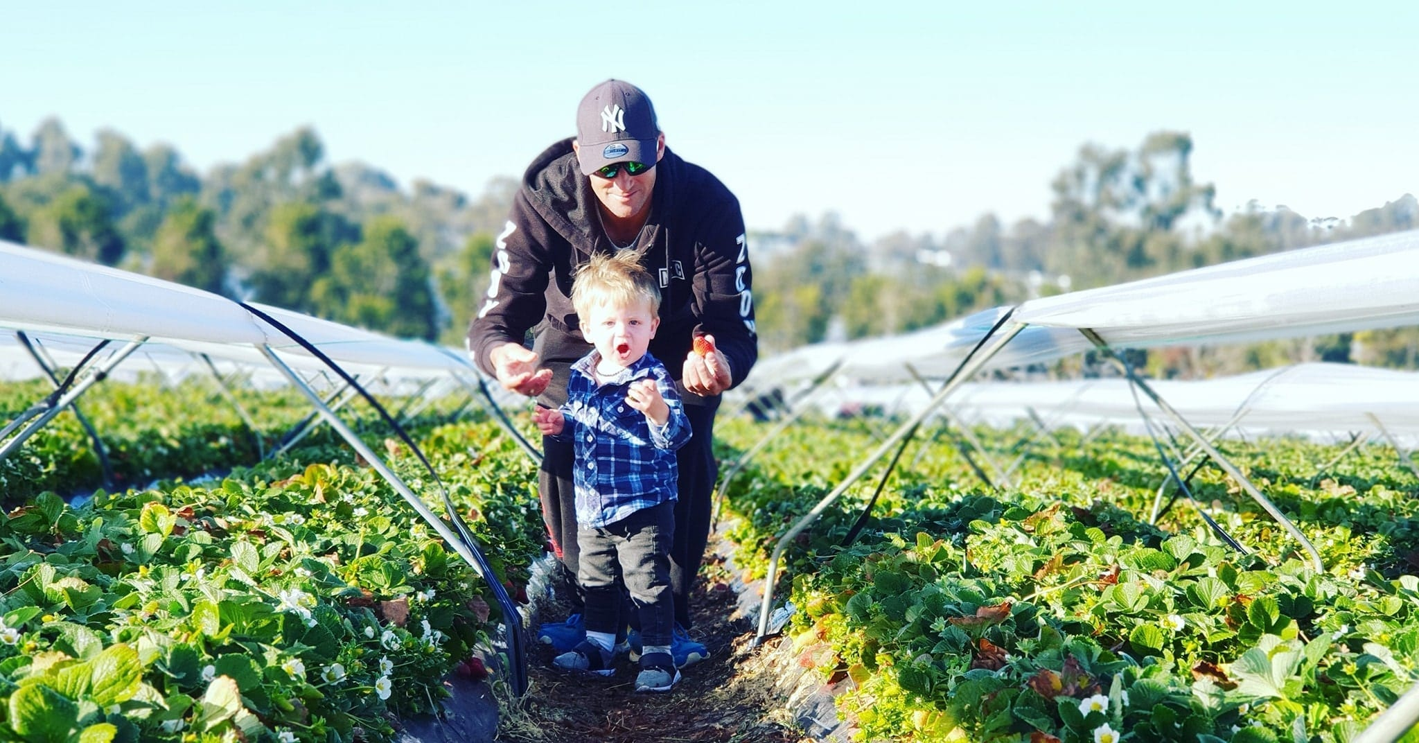 D'Uva's Strawberry Picking, Wanneroo