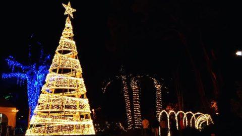 The Magic of Christmas at Wanneroo Botanic Gardens
