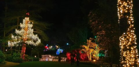 The Magic of Christmas at Wanneroo Botanic Gardens