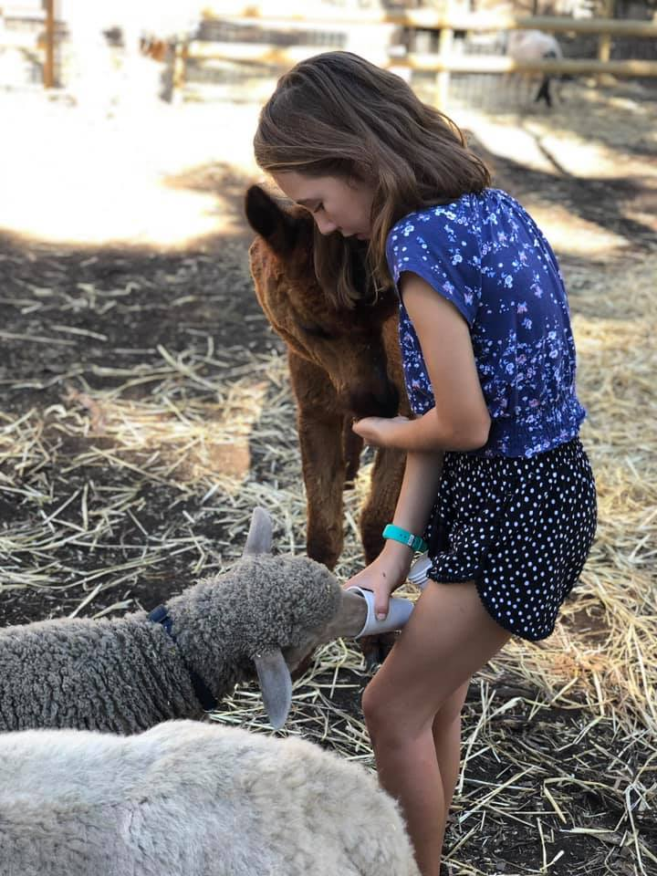 Wanneroo Cuddly Animal Farm