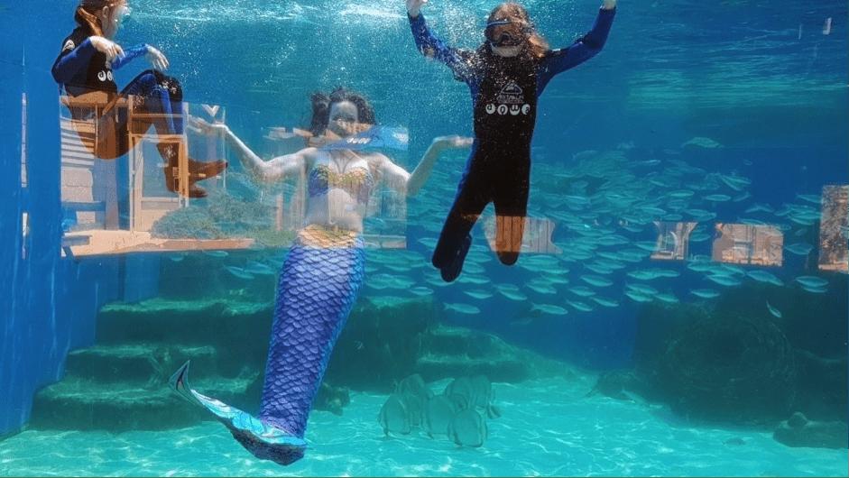 Mermaid Magic At Aqwa Buggybuddys Guide To Perth