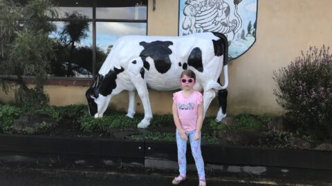Candy Cow, Cowaramup
