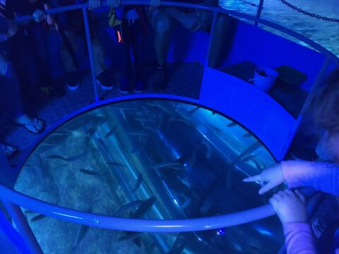 AQWA Glass Bottom Boat Adventure