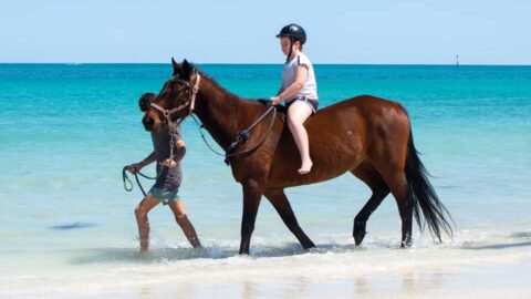 Wanneroo Riding Centre – Beach Horse Rides at Whitfords Beach